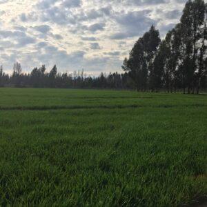 Terreno Chimbarongo, Sector La Platina